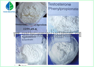China Testosterone Steroid Hormone Anti Estrogen Steroids For Muscle Gaining supplier