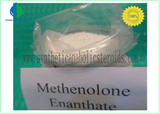 China CAS 303-42-4 Nandrolone Steroid , Methenolone Enanthate Powder Lean Muscle Steroids supplier