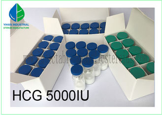 China Injectable Gonadotropin Human Growth Hormone Peptide HCG 5000iu/ Vial supplier