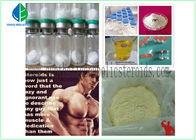 China Testosterone Isocaproate Fast Muscle Gain Steroids , Build Muscle Steroids 15262-86-9 factory