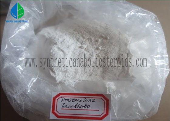 China High Purity Raw Steroid Powders Drostanolone Enanthate for Bodybuilding , CAS 13425-31-5 factory